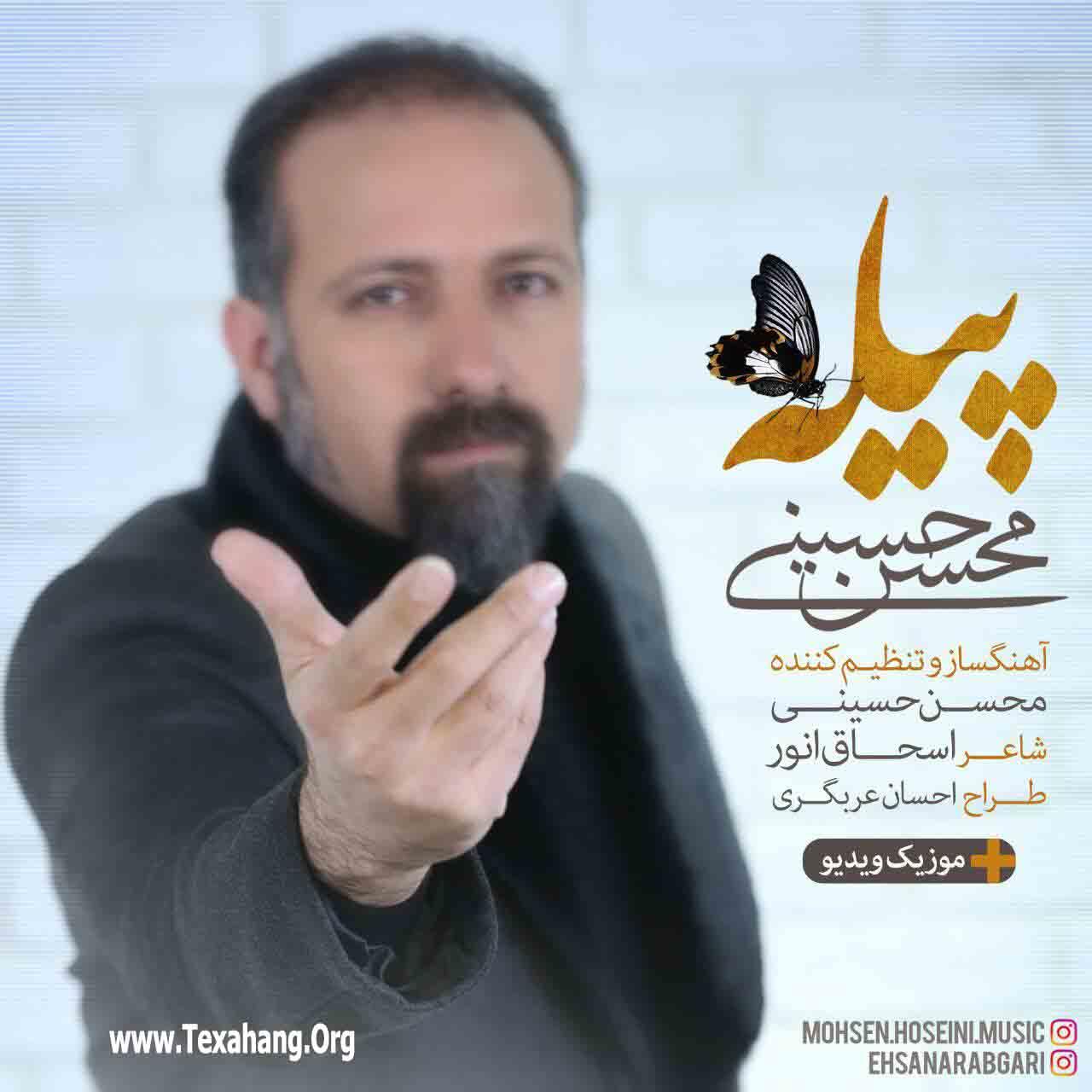 متن آهنگ جدید پیله از محسن حسینی